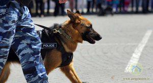 بانک اطلاعات انتخاب بازیگر دفتر سینمایی ،سگهای زنده یاب۰۴