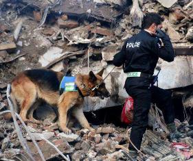 بانک اطلاعات انتخاب بازیگر دفتر سینمایی ،سگهای زنده یاب۰۲