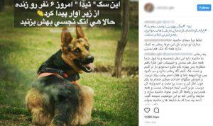 بانک اطلاعات انتخاب بازیگر دفتر سینمایی ،سگهای زنده یاب۰۱