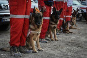 بانک اطلاعات انتخاب بازیگر دفتر سینمایی ،سگهای زنده یاب۰۵